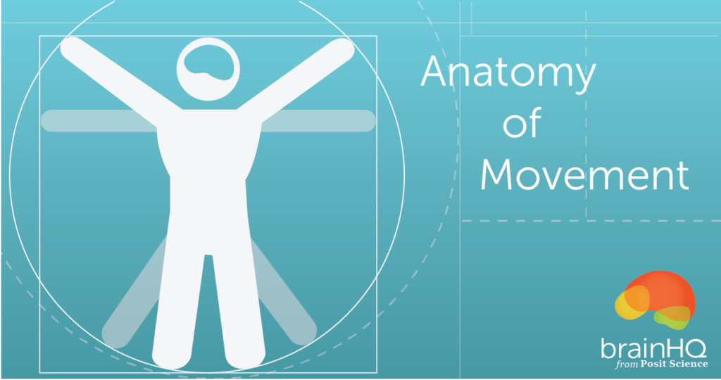The Anatomy of Movement